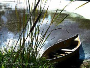 cattail pond